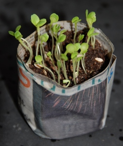 recycled newspaper plant pot
