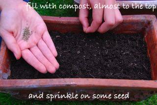 windowsill vegetable garden - sow seeds