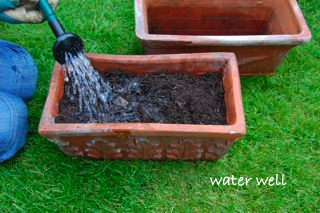 windowsill vegetable garden - water