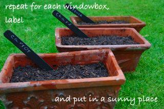 windowsill vegetable garden - label