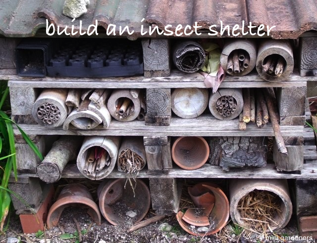 build an insect shelter