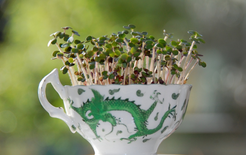 cress growing in a teacup