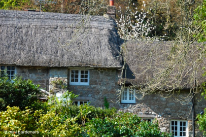thatched cottage in devon