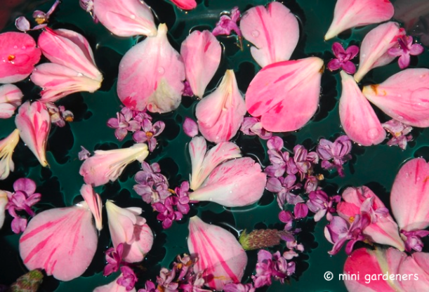 making perfume from flower petals