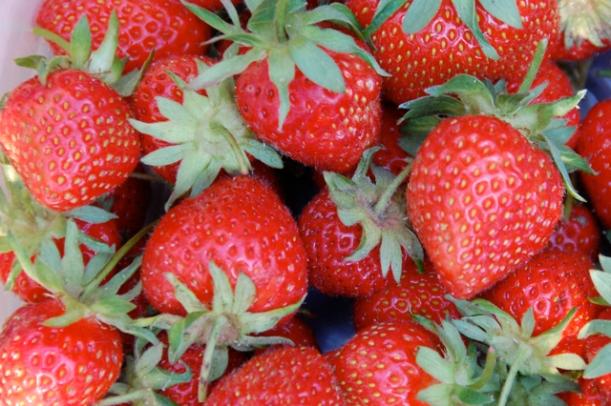 grow yur own strawberries