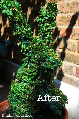 topiary rabbit