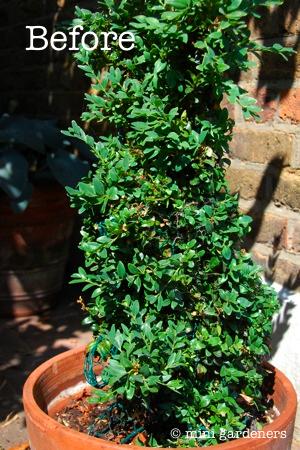 topiary rabbit