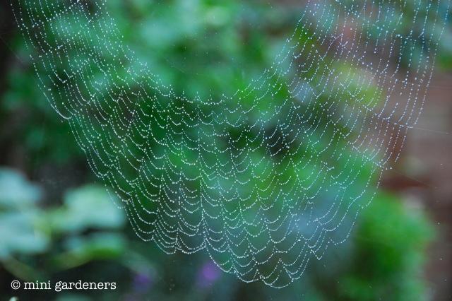 spider's web on window