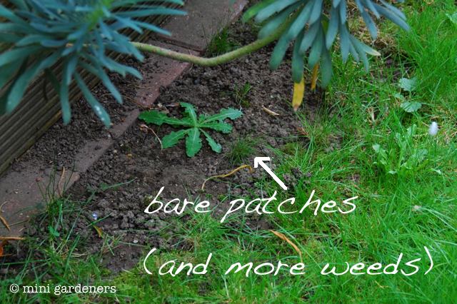 bare patches in a lawn