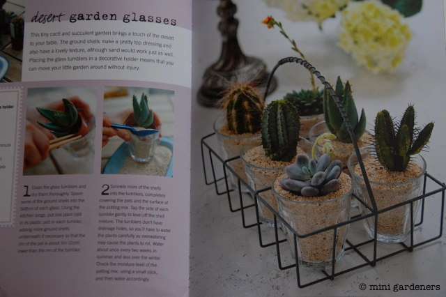 Cacti in glasses from Teeny Tiny Gardening
