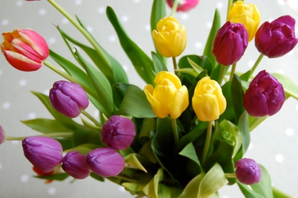 flower arranging tulips