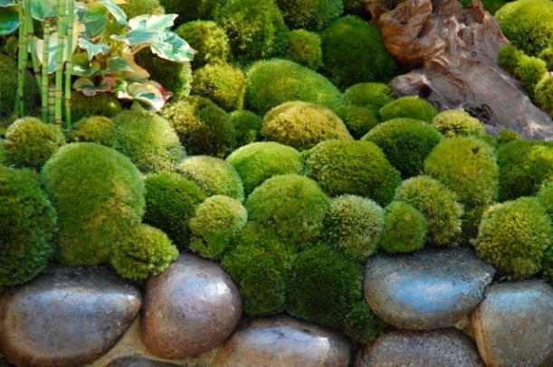 detail of moss at chelsea flower show