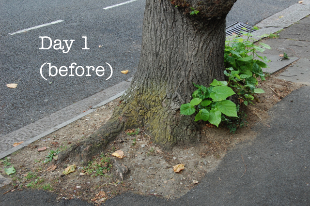 guerrilla gardening in street tree pits