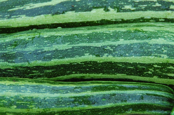 grow your own stripy courgettes